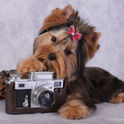 yorki-foto.ru ... on My World.