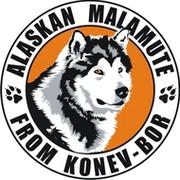 Аляскинские Маламуты группа в Моем Мире.
