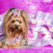 """Одежда для собак """"ГавМода"""" www.gavmoda.ru группа в Моем Мире."""