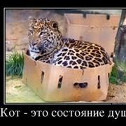 Кот******(ДЗ) ***** on My World.