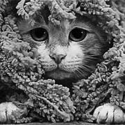 юлия котина on My World.