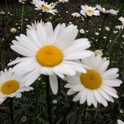 Valentina ))) on My World.